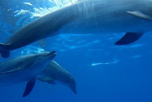 Marine Land Dolphins