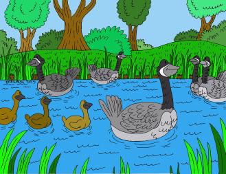 Peace Pond